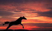 Silhouette of a horse in a jump — 图库照片