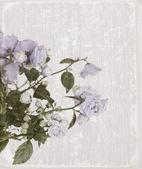 Gamla kort med campanula blommor — Stockfoto