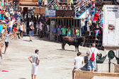 Festival of bulls and horses in Segorbe — Stock Photo