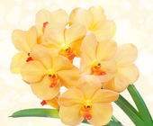 Flowers of an orchid — Stock Photo