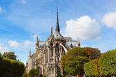 Notre-Dame in sunny autumn day — Stockfoto