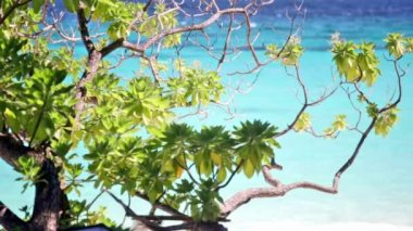 Branch of a tropical tree against the ocean shined with the sun — Stock Video