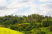 Tropikal orman — Stok fotoğraf
