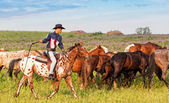 Cowboy on skewbald horse — Stock Photo