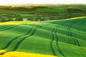 Green wavy hills — Stock Photo