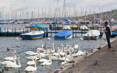Woman feeds swans in Geneva — Foto de Stock
