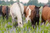 Los caballos comen una hierba en pasto — Foto de Stock