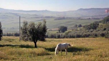 Gray horse grazed in field — Stock Video