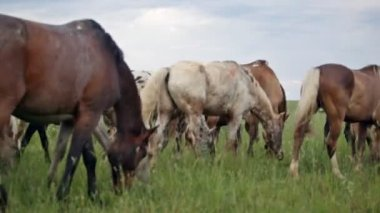 Variegated herd of horses — Stock Video