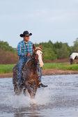 Cowboy on a horse — Stock Photo