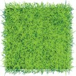 Stock Vector: Grass sod