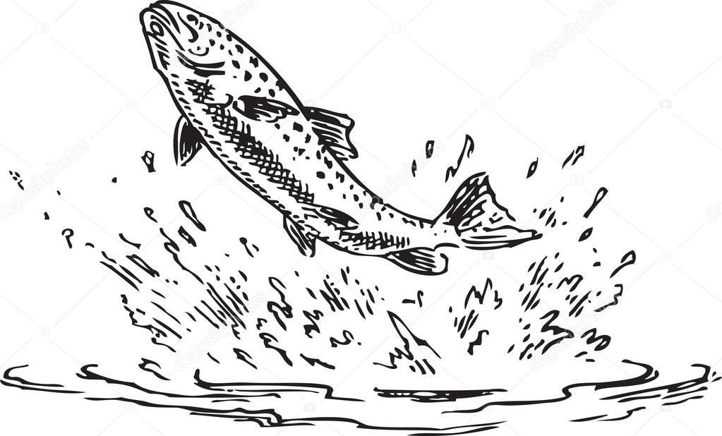 Poisson truite image vectorielle 18642825 for Koi qui saute hors de l eau