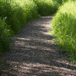 Stock Photo: Walking trail in woods