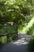 Walking trail in the woods — Stock Photo