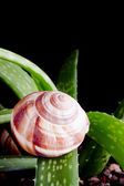 Snail in nature — Stock Photo