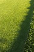 Edge of a golf course — Stock Photo