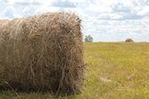 Making hay — Stock Photo