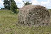 Making hay — Stock Photo