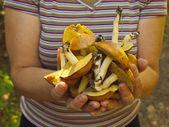 Garść grzybów. — Zdjęcie stockowe