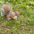 wild animals.squirrel — Stockfoto #13219778