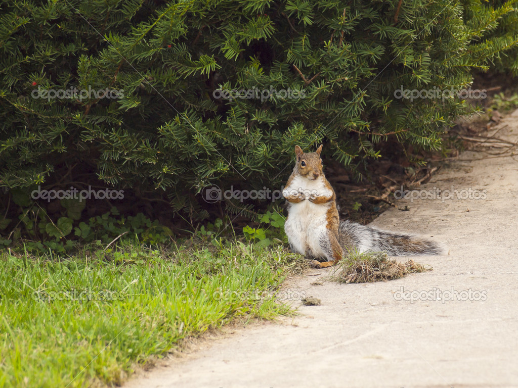 Wild animals. Squirrel sitting on the grass. — Stock Photo #13219679