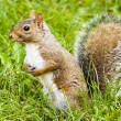 Wild animals.Squirrel. — Foto Stock