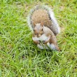 Photo: Wild animals.Squirrel.