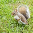 Stock Photo: Wild animals.Squirrel.