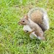 Wild animals.Squirrel. — Stock Photo