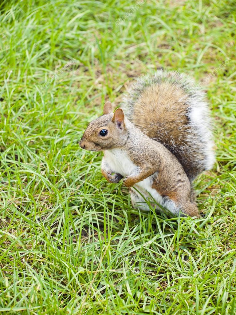 Wild animals. Squirrel sitting on the grass. — Photo #13220025