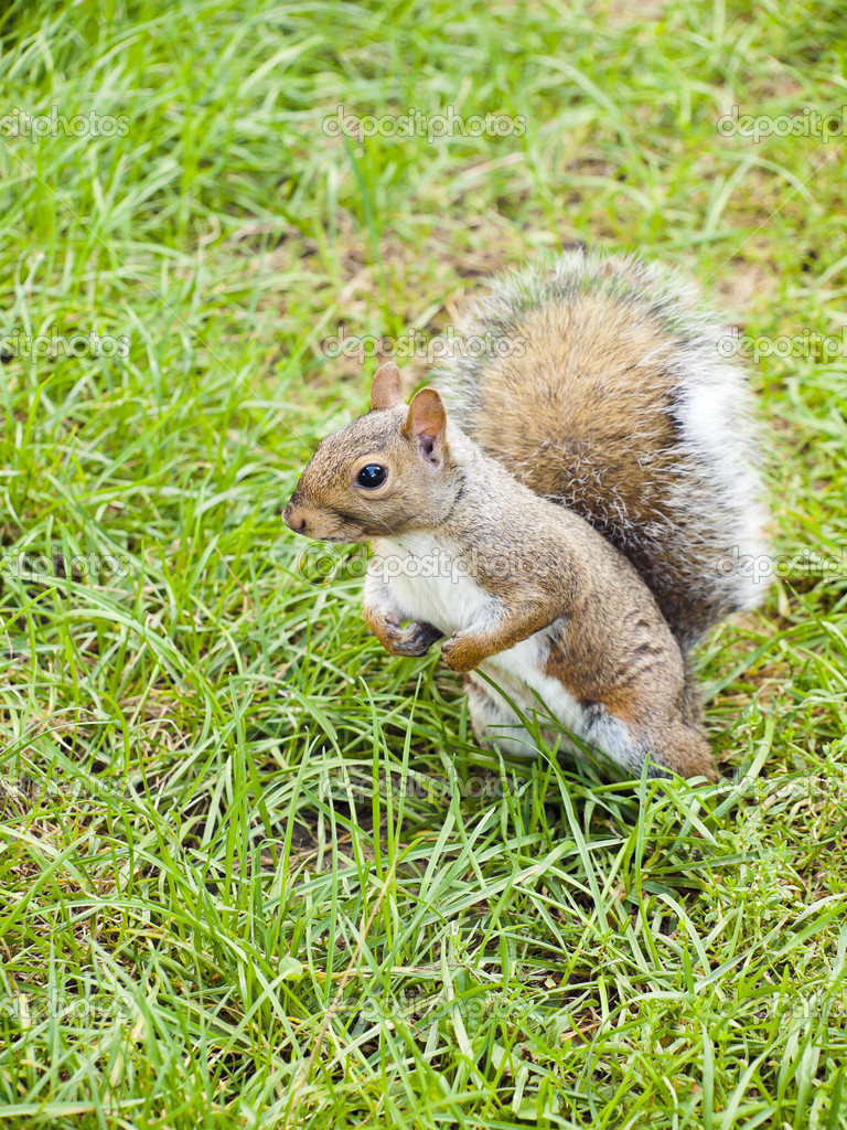 Wild animals. Squirrel sitting on the grass. — Стоковая фотография #13220025