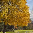 Golden Autumn. - Stock Photo