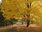 秋天的颜色。秋天的公园. — 图库照片