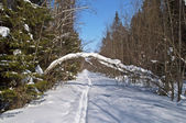 Clearing in winter forest — Stock Photo