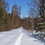 Ski track in winter forest — Stock Photo