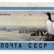 Rookery in the Kuril Islands on post stamp — Stock Photo