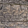 Texture of old rugged boards — Stock Photo