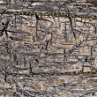 Stock Photo: Texture of old rugged boards
