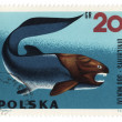 Prehistoric fish Dinichthys on post stamp — Stock Photo