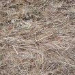 Last year's dry grass background — Stock Photo #2791204