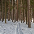 Ski run in pine forest — Stock Photo