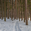 Stock Photo: Ski run in pine forest