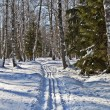 Mixed forest in winter — Stock Photo