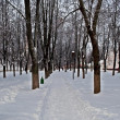 Snow-covered alley in park — Stock Photo