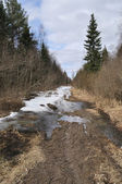 Foot path with snow and dirt in early spring forest — Stockfoto