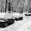 Cars under snow in black and white — Stock Photo
