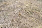 Vorig jaar droog gras achtergrond — Stockfoto