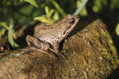 Frog sitting on a log — Stock Photo