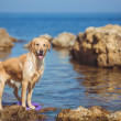Young woman, labrador dog, sea — Stock Photo