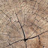Textuur van boomstronk — Stockfoto